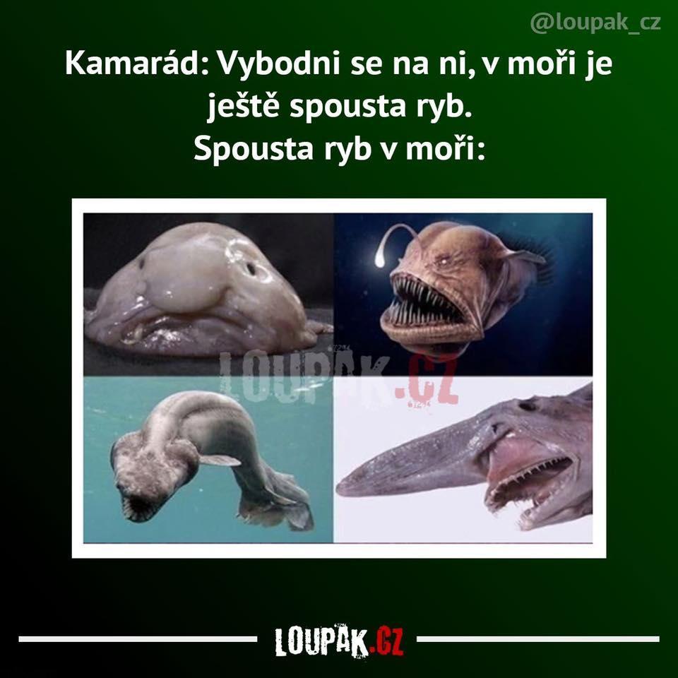 Spousta ryb