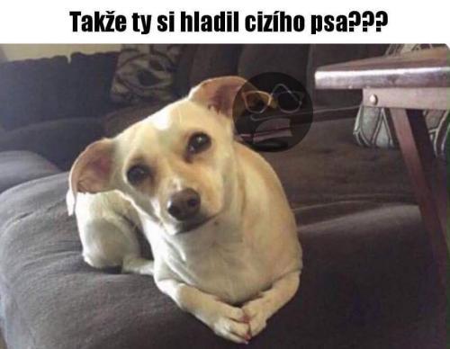 Cizí pes