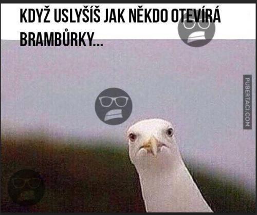 Brambůrky