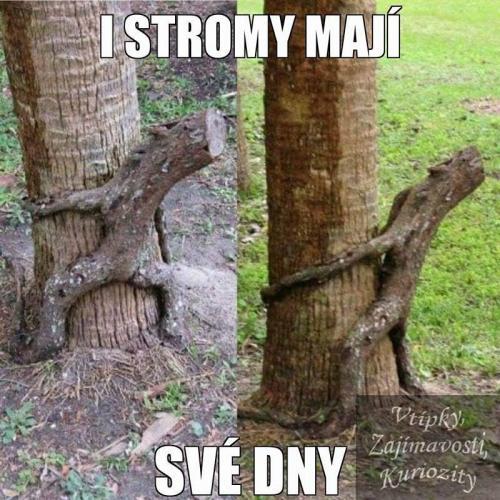 I stromy