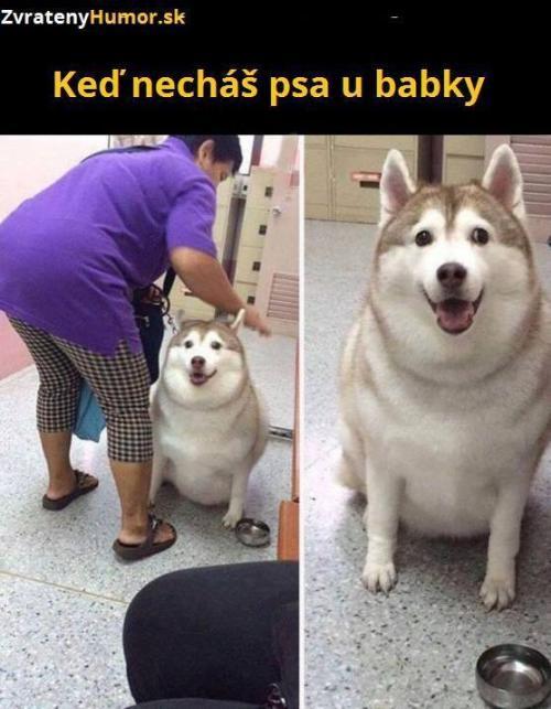 Pes u babičky