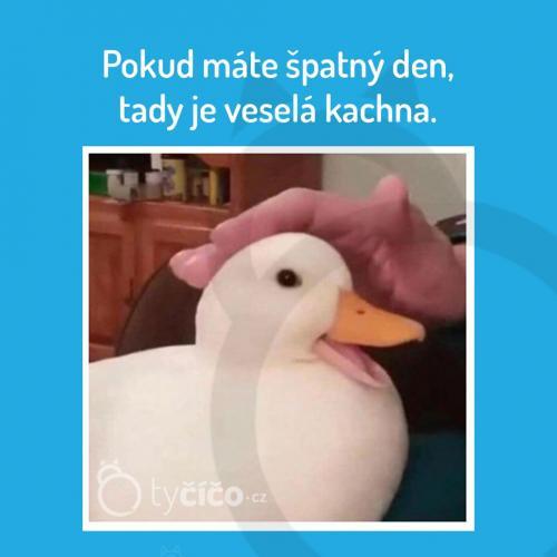Veselá kachna