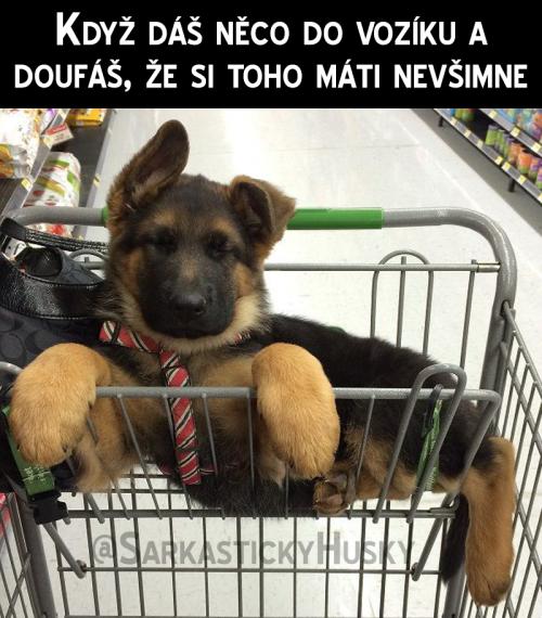 Škoda, že neprodávají psy v supermarketech