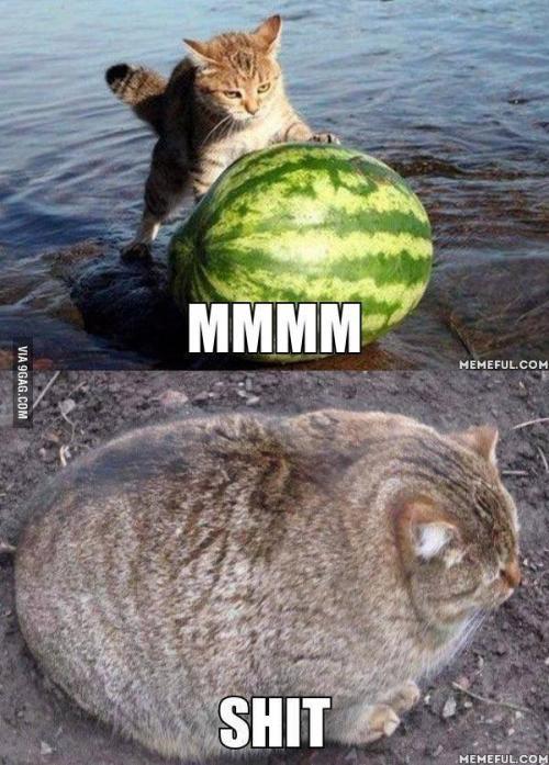 Kočka je taková anakonda mezi savci