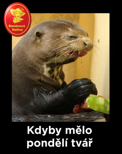 Kdyby Kdyby
