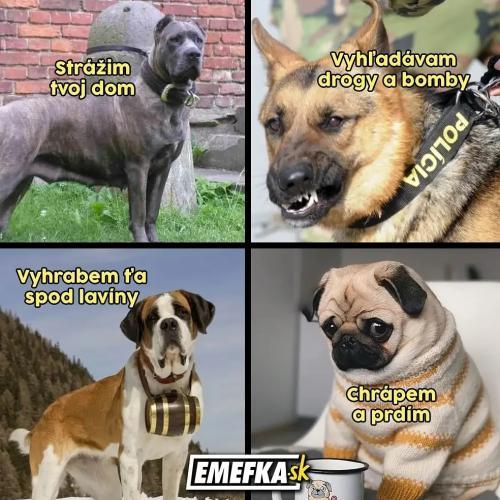 Každý pes dělá něco jiného