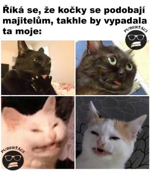 Majitel