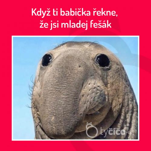 Fešák