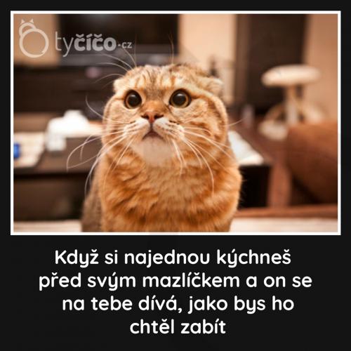 Domácí mazlíček