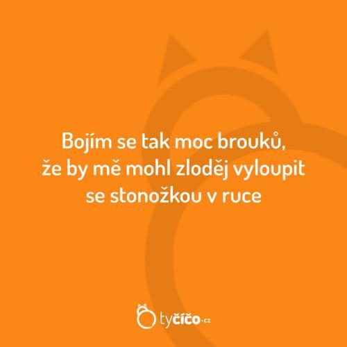 Brouci