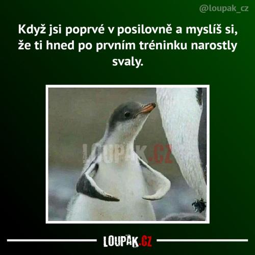 Svaly
