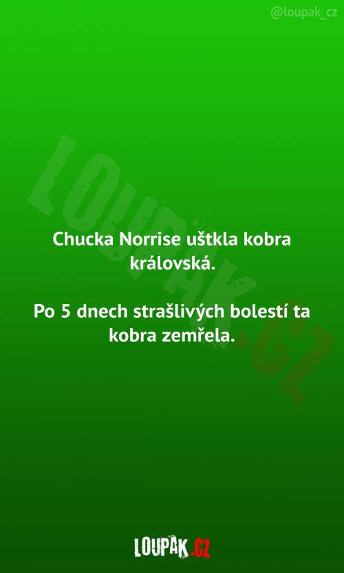 Chucka Norrise uštkla kobra