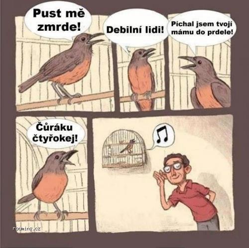 Ptáčci zpívají