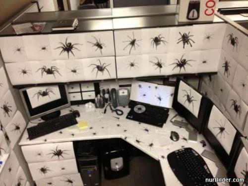 Fanoušek pavouků