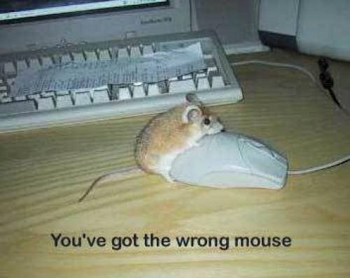 Není myš jako myš