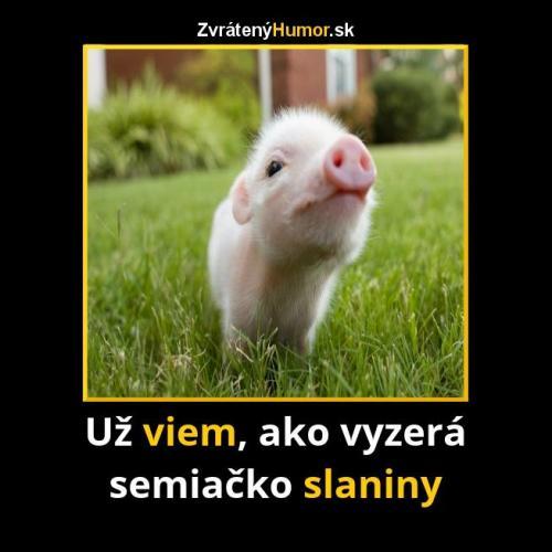 Semínko slaniny