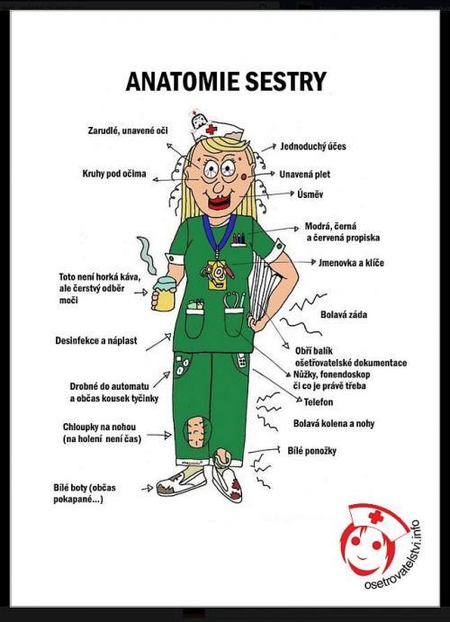 Anatomie zdravotní sestry