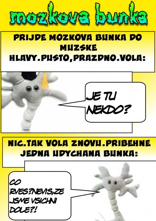 MOZKOVÁ BUNKA