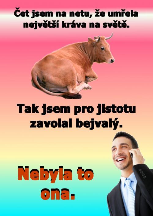 Největší kráva na světě