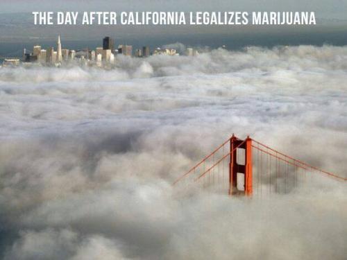 Kalifornie legalizovala trávu