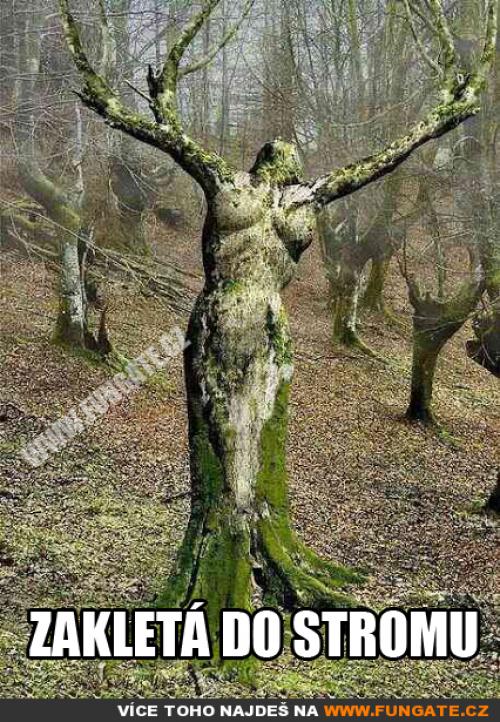 Zakletá do stromu