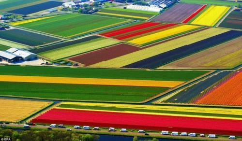 Pole v Nizozemí :)