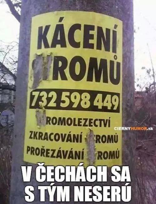 Kácení romů