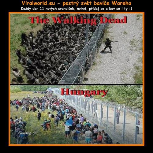 TWD vs Maďarsko
