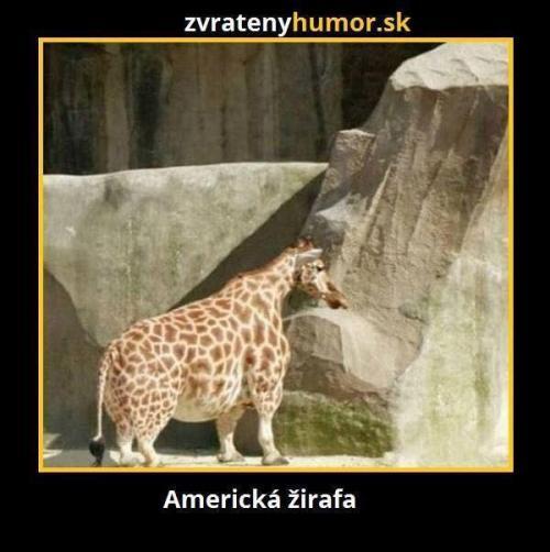 Americká žirafa