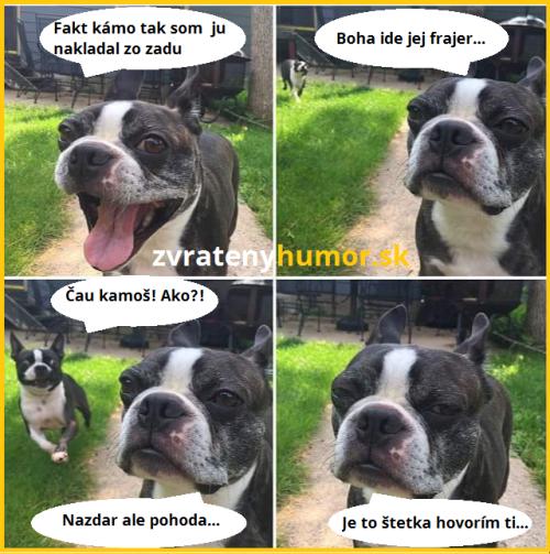 Pes drsňák :D