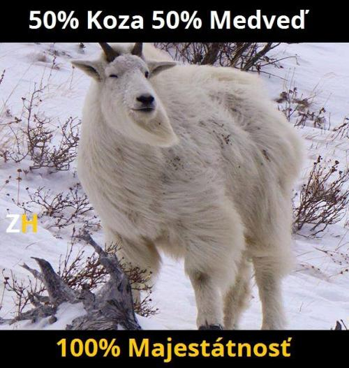 50% koza 50% medvěd