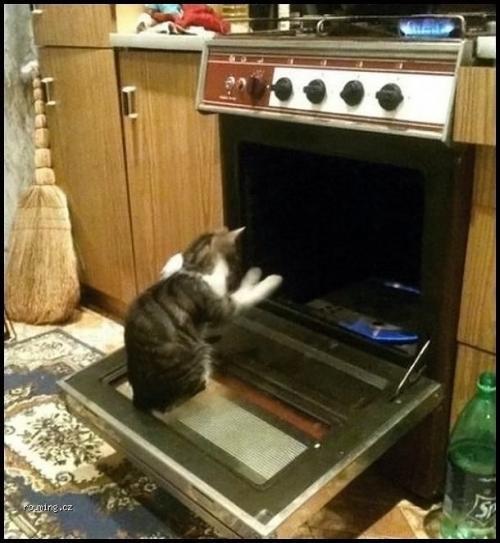 Kočce je zima