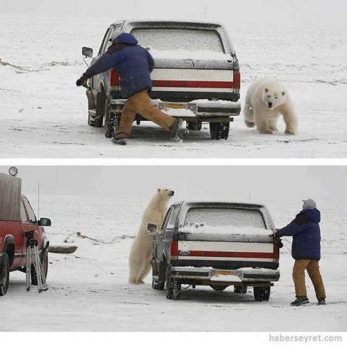 Muž vs lední medvěd