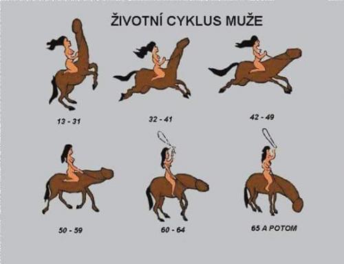 Životní cyklus muže)