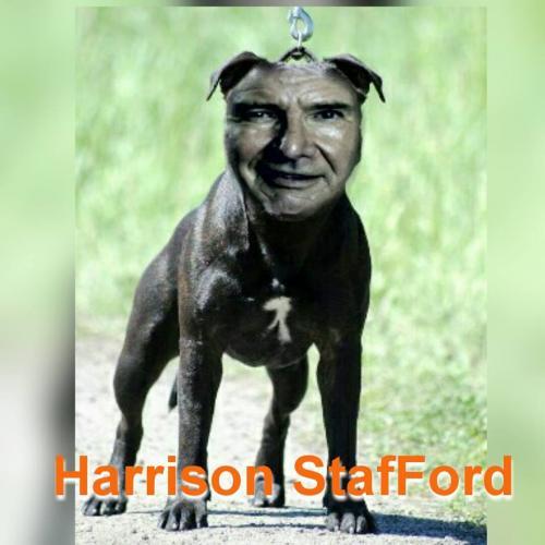 Harrison StafFord