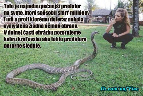 Nejnebezpečnější predátor