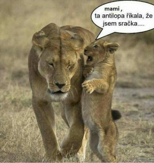 Antilopa