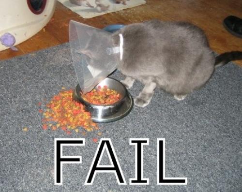 Kočička má hlad