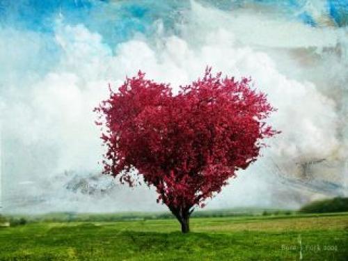 Originální strom
