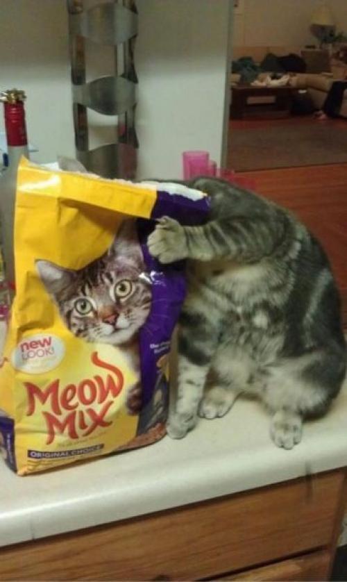Krmení vs. kočka