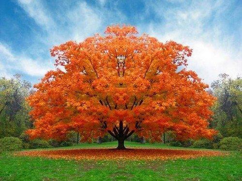 Výsledek obrázku pro podzimní strom