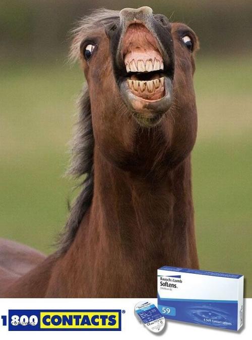 Koňské zuby
