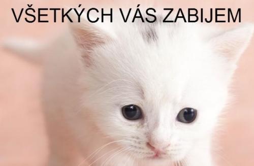 Zlé kotě
