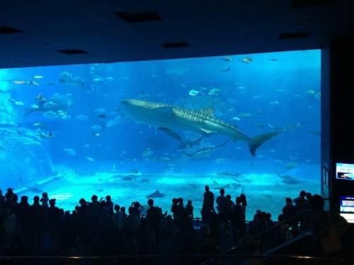 Obří akvárium