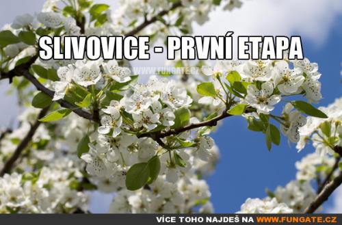 Slivovice - prví etapa