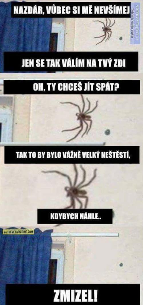 Pavouci :D
