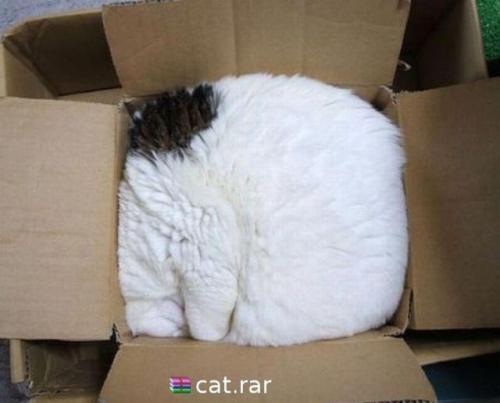 Kočka.rar, kočka v krabici