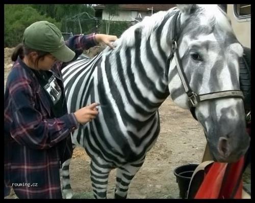 Falešná zebra