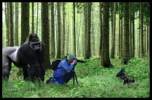 Fotografování goril