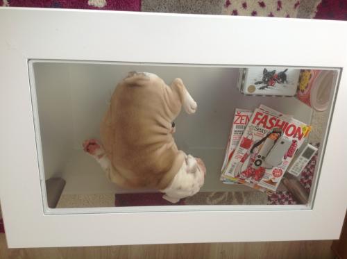 Bulldog :-)